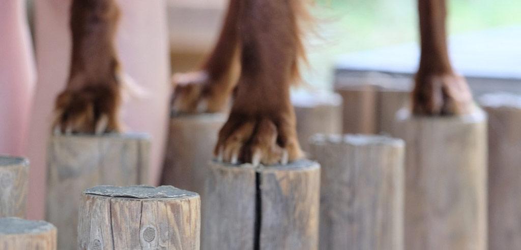 Hundehandwerk mit Tanja Schweda