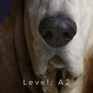 Mantrailing Level A2 Tanja Schweda