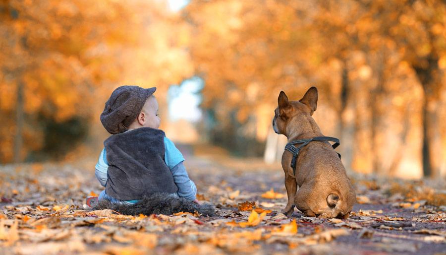 Hundehandwerk Team Boost mit Tanja Schweda