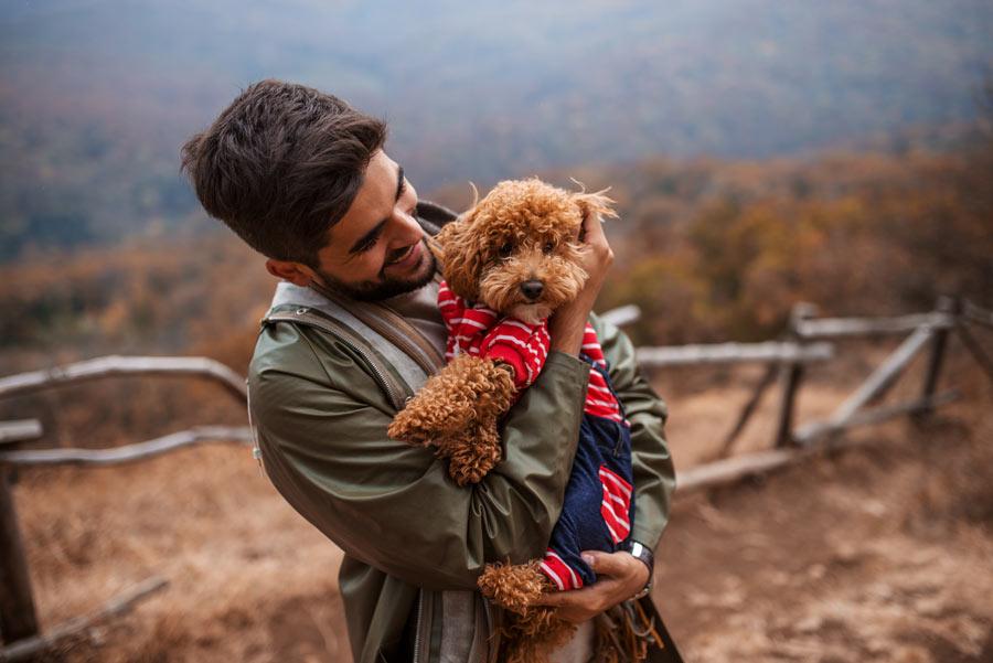 Team Boost Training und Coaching für Mensch mit Hund